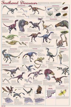 Dinosaures à plumes