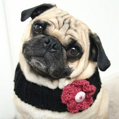 just because she's soooo stylish, she'd look fab in this too!! Neck Warmer for Dogs by jessicalynneart on Etsy, $10.00