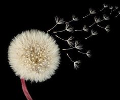 Jeg ser mig selv so en social gartner der elsker at se små frø vokse til smukke blomster