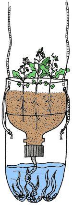 Botella Biología | Columna TerrAqua - ¿Cual es La Conexión tierra-agua?