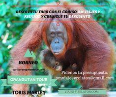 Si sueñas con viajar a Borneo en Indonesia y observar a los orangutanes en libertad, contáctanos....#Orangutanes #Borneo