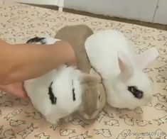A successful rabbit magnet test - Funny GIFs Cute Baby Bunnies, Funny Bunnies, Cute Babies, Bunny, Adorable Dogs, Cute Animal Videos, Funny Animal Pictures, Cute Little Animals, Cute Funny Animals