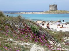 sardinien-sardegna-italien-reise-europa-see-fruhling-sardinien-asinara-pel/ - The world's most private search engine Travel Europe, Italy Travel, Beach Relax, Hiking, Seasons, Vacation, Landscape, World, Nature