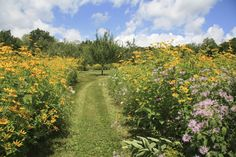 An environmental designer shares his secrets for growing dazzling, lush meadows.