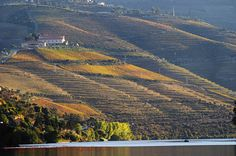 Has The Time Come For Portuguese Wines? - via Forbes 16.05.2015 | In fact, they make some outstanding wines in Portugal. Although it is a country mostly known for its fortified port wines the majority of the wines made in this southern European country is table wines. #portugal #travel #wine Photo: Vineyards in the Douro Valley