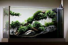 Корни Анубиаса в 19 литрах - AQUAFANAT - форум аквариумистов