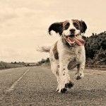 runwaydog