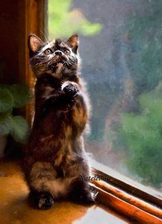Kittens (123 Photos)