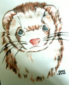#ferret #love #watercolor #jamyarts #newart #art #happy #kunst #tiere #animal