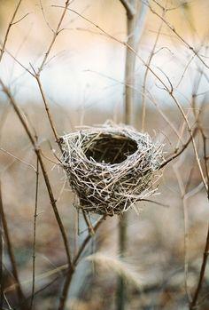 thequiddity:  Bird's nest