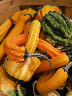 Fall Farmers Market, Carmel, Indiana