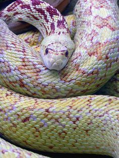 Beautifully colored snake.
