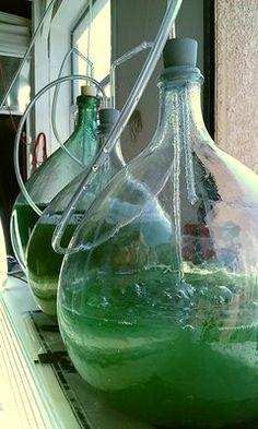 fais pousser des algues dans ton évier / le mouv'