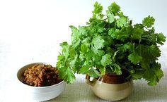 Coriander-Tomato Chutney and Fresh Coriander