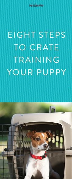 Pupy Training Treats - Pupy Training Treats - Ready to crate train puppy? Read this first. - How to train a puppy? - How to train a puppy? Dog Training Methods, Basic Dog Training, Dog Training Techniques, Puppy Training Tips, Crate Training, Potty Training, Training Classes, Leash Training, Training Dogs