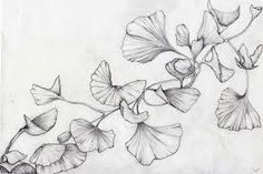ginkgo biloba leaves - Google Search