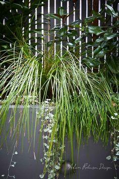 Landscape Design Stanmore — Adam Robinson Design Backyard Garden Design, Small Backyard Landscaping, Small Garden Design, Modern Landscaping, Backyard Patio, Backyard Ideas, Small Courtyard Gardens, Small Courtyards, Next Garden