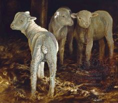 Three Little Lambs by Nancy Noel