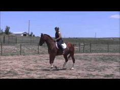 Learning Canter Pirouette at Walk: Part II