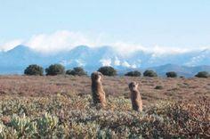 De Zeekoe Guest Farm - Meerkat Adventures South Africa, Things To Do, Flora, Adventure, Mountains, Travel, Things To Make, Viajes, Plants