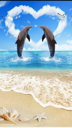 dolphin love wallpaper by newmoon1987 - e9b4 - Free on ZEDGE™
