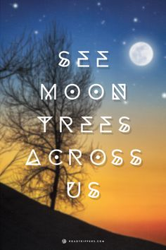 The seeds were in space before they were planted. See the famous moon trees today!