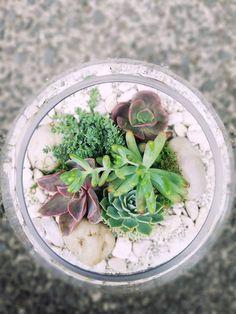 Large Fishbowl Terrarium Fishbowl, Auckland, Terrarium, Plants, Round Fish Tank, Terrariums, Fish Tank, Fish Bowl Vases, Flora