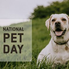 Show a furry member of your family some love today on National Pet Day. Whether they're the life of the party or love walks, keep them styling with a fashionable bow tie or safely protected from the rain this season. It's all about them today after all. #nationalpetday #pets #family #doglovers #raincoats #catlover #party #accessories #bowtie #animal #rainyday #red #yellow #onlineshopping #amazon #socialmediamarketing #socialmedia