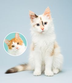 This adoptable beauty was on the cover of Modern Cat's winter issue! And clearly has a promising career in modeling.