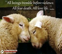 all being tremble before violence; all fear death; all love life ~ Buddha #vegan