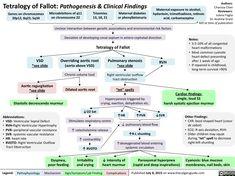 Tetralogy of Fallot-Pathogenesis & Clinical Findings Cardiac Nursing, Nursing Care, Cardiac Assessment, Medical Mnemonics, Medical Laboratory Science, Nursing School Notes, Care Hospital, Respiratory Therapy, Human Anatomy And Physiology
