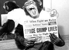Ham (1956 – January 19, 1983) was a chimpanzee and the first hominid launched into space, on 31 January 1961. Ham's name is an acronym for the lab which prepared him for his historic mission - Holloman Aerospace Medical Center, located at Holloman Air Force Base in New Mexico. After the flight Ham lived for 17 years in the National Zoo in Washington, D.C. before joining a small group of captive chimps at North Carolina Zoo.