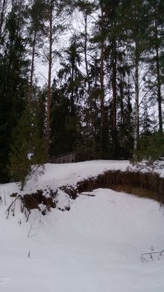 Daily photo journal 36_365_Monttu   Päivän kuva #Timpen