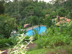 The wonderful chlorine-free swimming pool surround by lush jungle