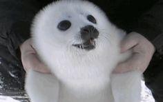 Cute animal gifs - Album on Imgur