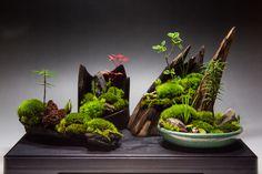 裏ワザ30 癒しの苔盆栽 里山の風景 コラボで!
