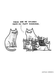 Crazy cat lady humor.