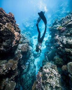 Coral reefs, little fish, the seabed and lots of bubbles – there's an entire world down here. The Whitsundays, Hamilton Island, Little Fish, Great Barrier Reef, Snorkeling, Under The Sea, Playground, Diving, Backyard