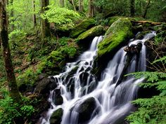 Tremont Area, Smoky Mountains National Park, Tennessee