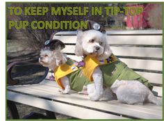 LINE 7 OF THE PUP SCOUT PLEDGE JOIN PUP SCOUTS TODAY AT http://www.pupscoutsusa.com/