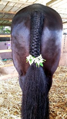 Horse tail flower braid