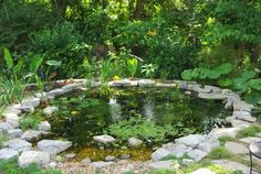 : Pond update, early June (Alan's stunning new pond!) # Gardening pond Advice For Growing Beautiful Flowers, Produce And Other Plants - Useful Garden Ideas Back Gardens, Small Gardens, Outdoor Gardens, Garden Pond Design, Big Garden, Summer Garden, Pond Landscaping, Ponds Backyard, Garden Ponds
