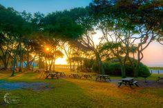Myrtle Beach State Park - Matthew Trudeau Photography
