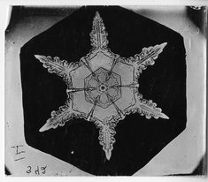 Search results for: Wilson A. Bentley snowflake smithsonian archives, page 1 Snowflake Bentley, Snowflake Photos, Real Snowflakes, Special Snowflake, Ice Crystals, Snow Scenes, Winter Scenes, First Photograph, Snow And Ice