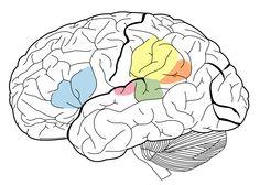 Manusiamemiliki keupayaan fizikal dan mental. Keupayaan fizikal melahirkan kebolehan-kebolehan manipulatif sementara keupayaan mental melahirkan kebolehan-kebolehan proses. [ketik pautan untuk bacaan lanjut]