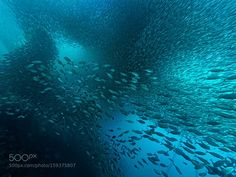 Sardinenschwarm by PeterBublitz Underwater Photography Underwater World, Underwater Photography, Waves, Boat, City, Outdoor, Free Shipping, Photos, Outdoors