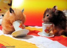 This is us having a tea party. Rach is the one with her face in the teacup.