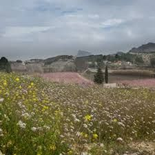 Image result for floracion cieza