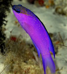 Beautiful fish by edpdiver, via Flickr