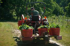 Tips On Getting Your Organic Garden Set Up - http://greenthumb.me/tips-on-getting-your-organic-garden-set-up/